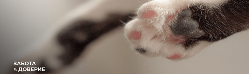 https://lucky-dog74.ru/image/cache/catalog/banners/brands/delicana_cats-870x259.jpg